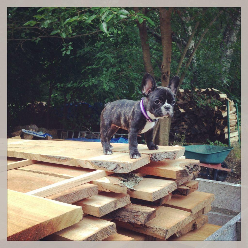 Pancake loves stacking lumber.
